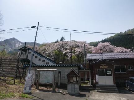 桜の土樽駅