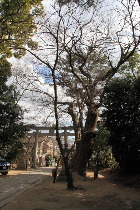 弓弦羽神社5