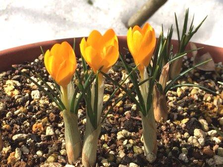 小さい春み~つけた!