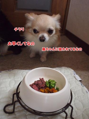 PC160462.jpg