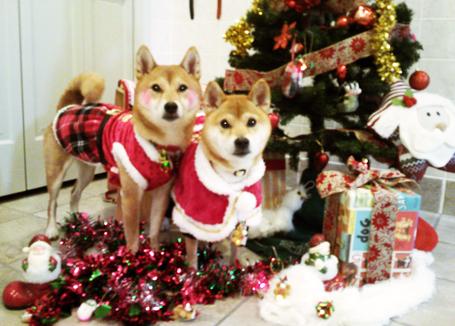 『いぬPHOTO撮影会』クリスマスヴァージョン9