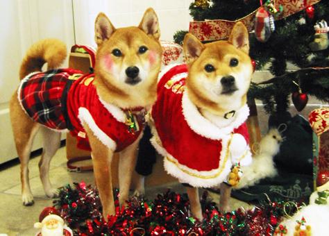 『いぬPHOTO撮影会』クリスマスヴァージョン8