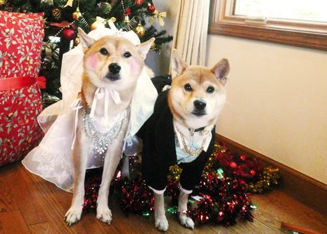 『いぬPHOTO撮影会』クリスマスヴァージョン4