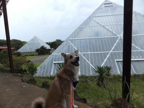 サボテン館のピラミッド