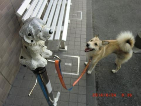 スリーエフの犬留拡大