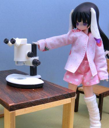 実体顕微鏡 (3)