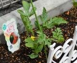 植物 (4)