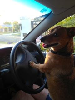 Skip Driving