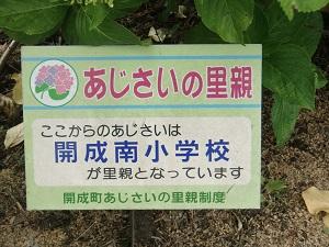 紫陽花の里親