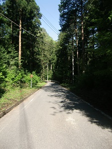 林道を進んで