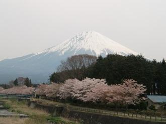 富士と桜*