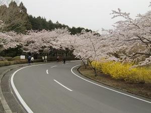 冨士桜自然墓地公園1