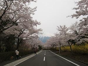 冨士桜自然墓地公園2