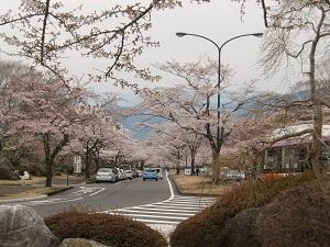 冨士桜自然墓地公園5