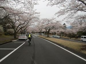 冨士桜自然墓地公園6