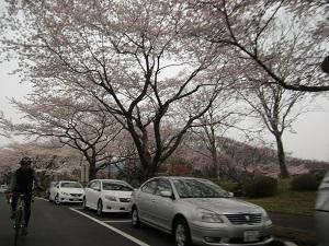 冨士桜自然墓地公園7