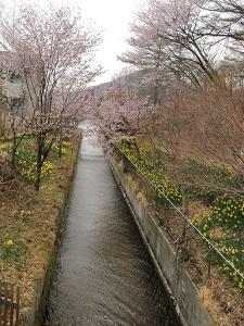 桜も咲いてる