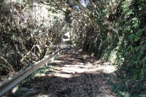 林道と言うか廃道