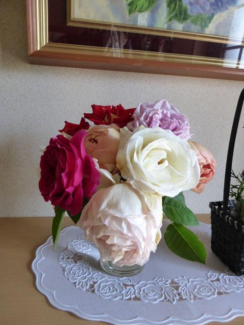 rose-255.jpg