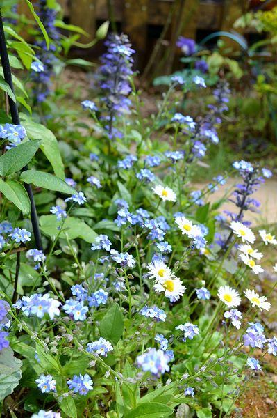 5,4小花の小径