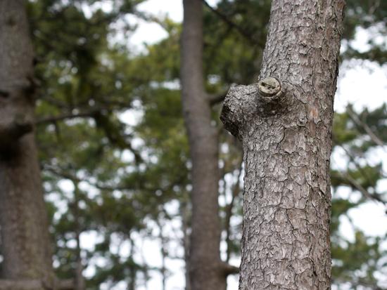 考える木?