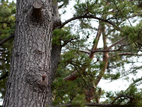 気煮なる木。