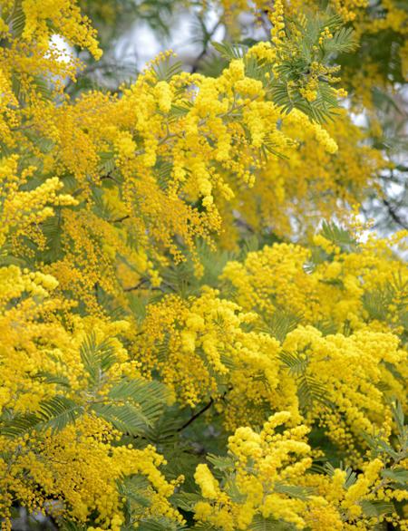 見事な黄色