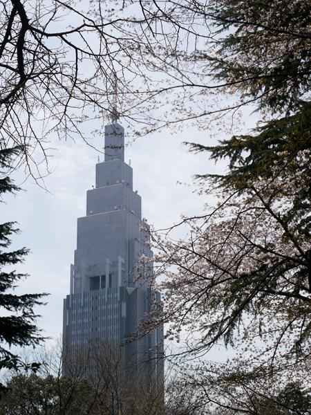 都庁と桜。