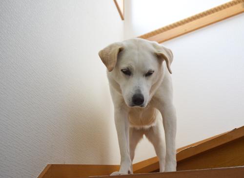 反抗する犬1