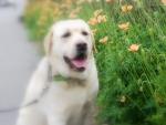 花を見て笑う2