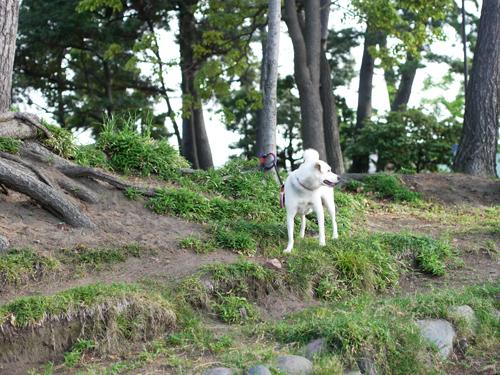 飼い主を探す犬。