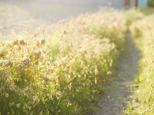 道ばたの雑草