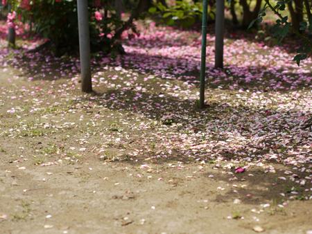 花びらが散って