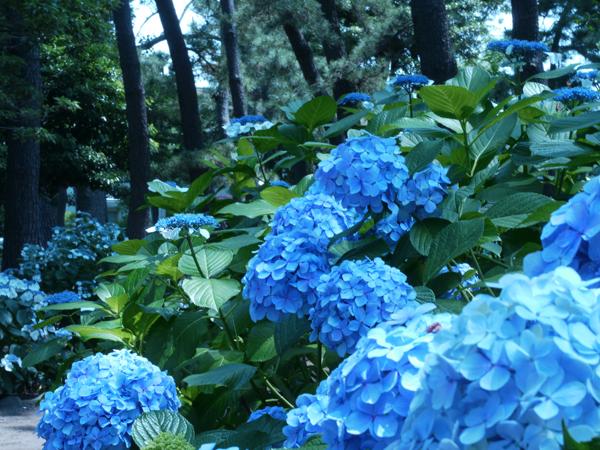 青い森の中。