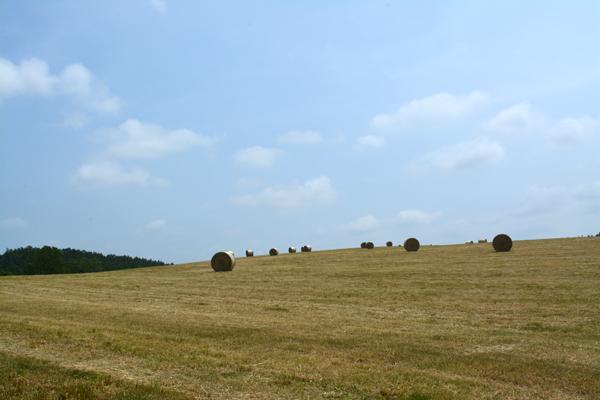 牧草ロール3