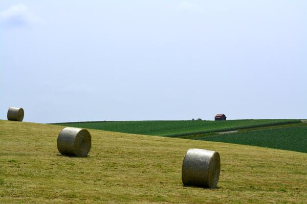 牧草ロール4