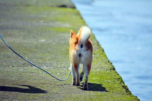 海べのお散歩