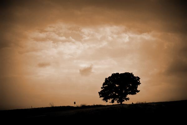 セブンスターの木3