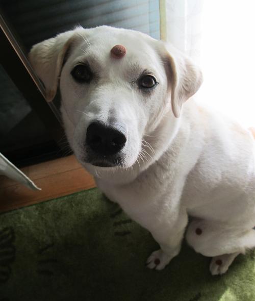 インドの犬?