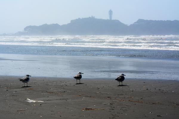 海を見つめる3羽のカモメ