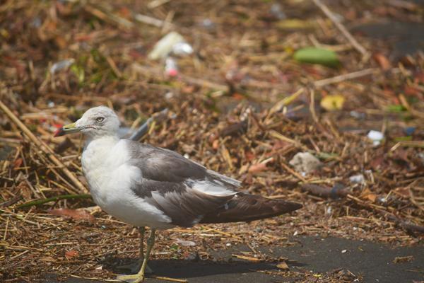 名前が分からない鳥。