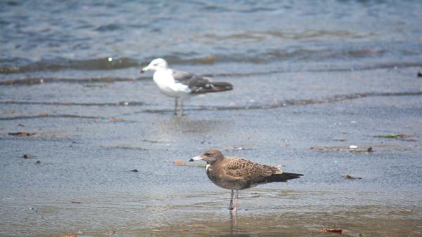 海を見つめる鳥
