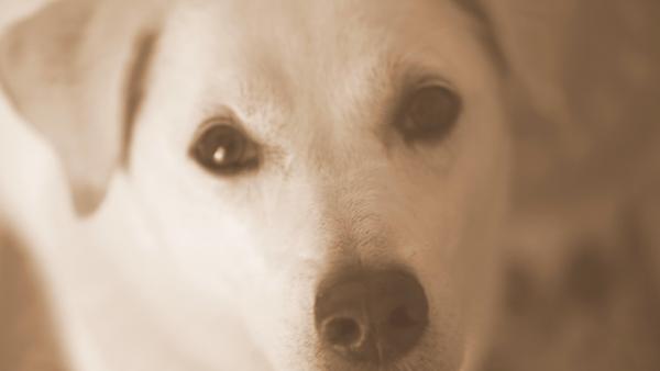 飼い主を見つめる目