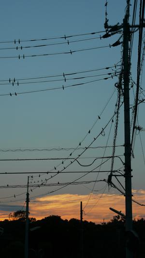 電線と夕焼け