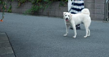 振り返る犬1