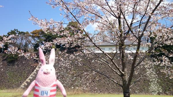 白壁&桜1