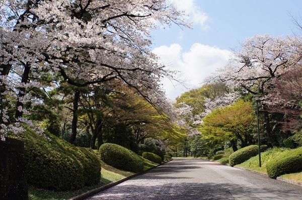 皇居への道