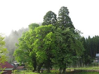 20140525生杉 005
