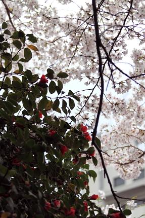 20140329_02.jpg