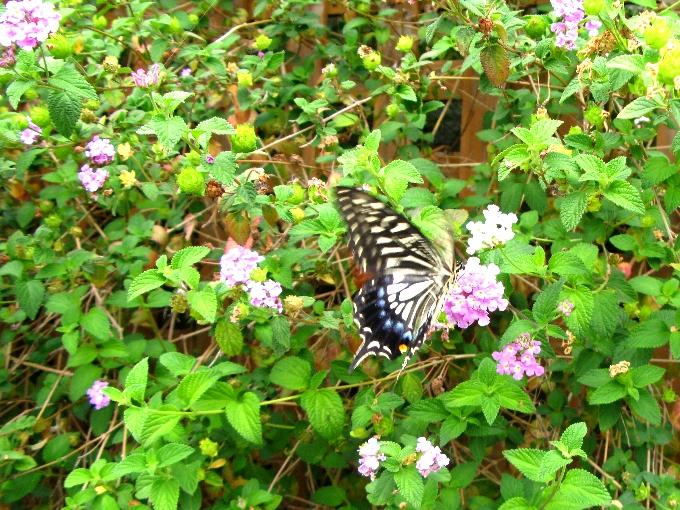 2014-6蝶々
